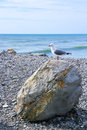 Seagull Standing Single-footed On Beach Rock Royalty Free Stock Images - 54149339