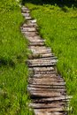Boardwalk In Forest Royalty Free Stock Images - 54160329