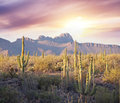 Saguaro Park Stock Photos - 54187103
