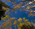 Autumn Canopy Stock Images - 5423704
