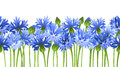 Horizontal Seamless Background With Blue Cornflowers. Vector Illustration. Stock Photo - 54205520