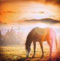Horse Grazing At Sunset On Autumn Meadow Stock Image - 54206681