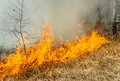 Wildfire Stock Images - 54236164