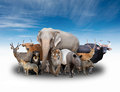 Group Of Asia Animals Stock Photography - 54272342