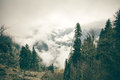 Coniferous Forest With Cloudy Mountains Royalty Free Stock Photo - 54272565