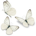 Three White Butterfly Royalty Free Stock Photo - 54289125