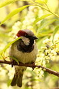 Sparrow Royalty Free Stock Image - 54293976