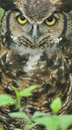 Great Horned Owl Stock Photo - 5437800