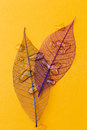Leaf On The Table Royalty Free Stock Images - 54310849