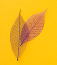 Leaf On The Table Royalty Free Stock Image - 54311006