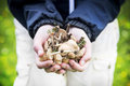 Child Hands Holding Edible Mushrooms Stock Photography - 54352162