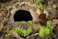 Hole In Tree Bark Stock Images - 54426994