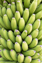 Green Bananas Royalty Free Stock Images - 54446949