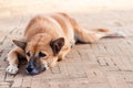 Homeless Lonely Street Dog Waiting For Someone On The Footpath Stock Image - 54477421