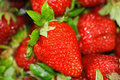 Strawberry Royalty Free Stock Images - 5459119
