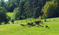 Horses In The Field Royalty Free Stock Photos - 54509738