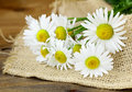 Bouquet Of Daisies On A Wooden Background Royalty Free Stock Images - 54531579