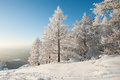 Forest Under Heavy Snow Stock Image - 54536191