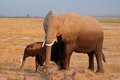 African Elephant With Calf Stock Image - 54551131