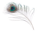 Peacock Feather Stock Images - 54581114