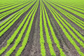 Crop Field Stock Images - 5467354