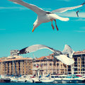 Seagulls In The Port Of Marseille, France, Filtered Royalty Free Stock Photography - 54608917
