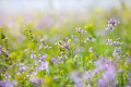 Abstract Dreamy Beautiful Sunny Meadow With Flowers Background Royalty Free Stock Images - 54639579