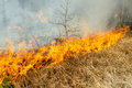 Wildfire Stock Images - 54668294