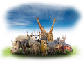 Group Of Africa Animals Stock Photo - 54701370