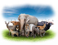 Group Of Asia Animals Royalty Free Stock Photography - 54701467