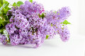 Purple Spring Lilac Flowers Blooming. On White Stock Photos - 54717763