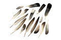 Feathers Royalty Free Stock Images - 54724779