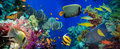 Colorful Underwater Reef With Coral And Sponges Stock Photos - 54725333