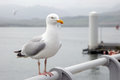 Seagull Perched On A Pier Stock Photography - 54753012