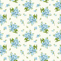 Seamless Pattern With Blue Forget-me-not Flowers. Vector Illustration. Royalty Free Stock Photography - 54777677
