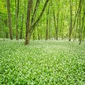 Deep Forest Royalty Free Stock Images - 54782589