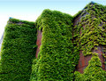 Brick And Ivy Royalty Free Stock Photos - 5488388