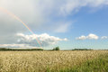 Farmland Summer Landscape With Rainbow, Cumulus Clouds And Cereal Field Royalty Free Stock Photo - 54807105