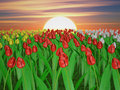 Tulips Stock Images - 54819634