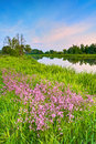 Flowers Countryside Spring Landscape Blue Sky River Stock Images - 54851294