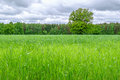 Field Of Green Grass Royalty Free Stock Images - 54853149