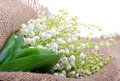 Lilies Of The Valley On The Sacking Stock Photography - 54860812