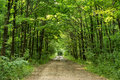Forest Road Royalty Free Stock Images - 54863969