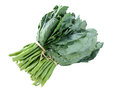 Kale In Isolate White Background Stock Photography - 54876392