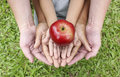Adult Hands Holding Kid Hands With Red Apple On Top Royalty Free Stock Photos - 54880458