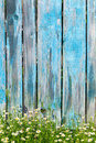 Daisy Flowers On A Background Of Wooden Fence Royalty Free Stock Images - 54901229