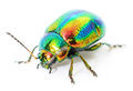 Green Beetle Royalty Free Stock Photography - 54903927