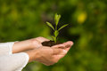 Holding Green Plant In Hand Stock Photography - 54904942