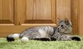 Serious Cat, Cat At Home, Proud Cat, Funny Cat, Grey Cat, Domestic Animal, Grey Serious Cat In Blurry Background, Fat Cat Stock Photography - 54942162