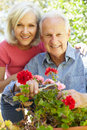 Mid Age Woman  And Father In Garden Royalty Free Stock Photos - 54946458